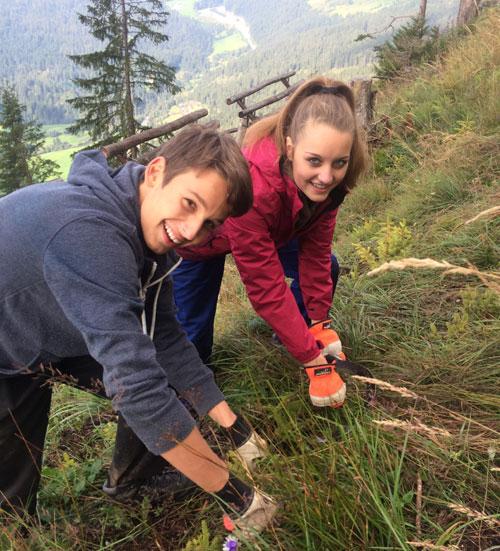 Bergwald Schweiz Trin Kant